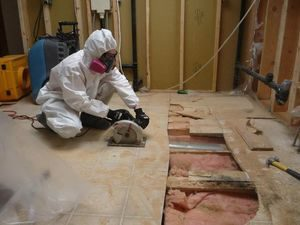 Mold Removal From Basement